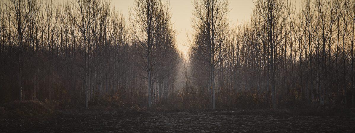 0004©Philippe BINDA_Paysage-arbres